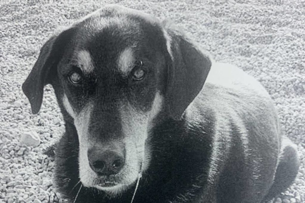 Book revisits legal fight to save Okanagan dog from death row - Kelowna Capital News
